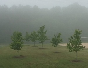Misty morning trees
